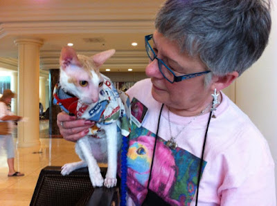 Brighton the Cornish Rex in his Route 66 shirt