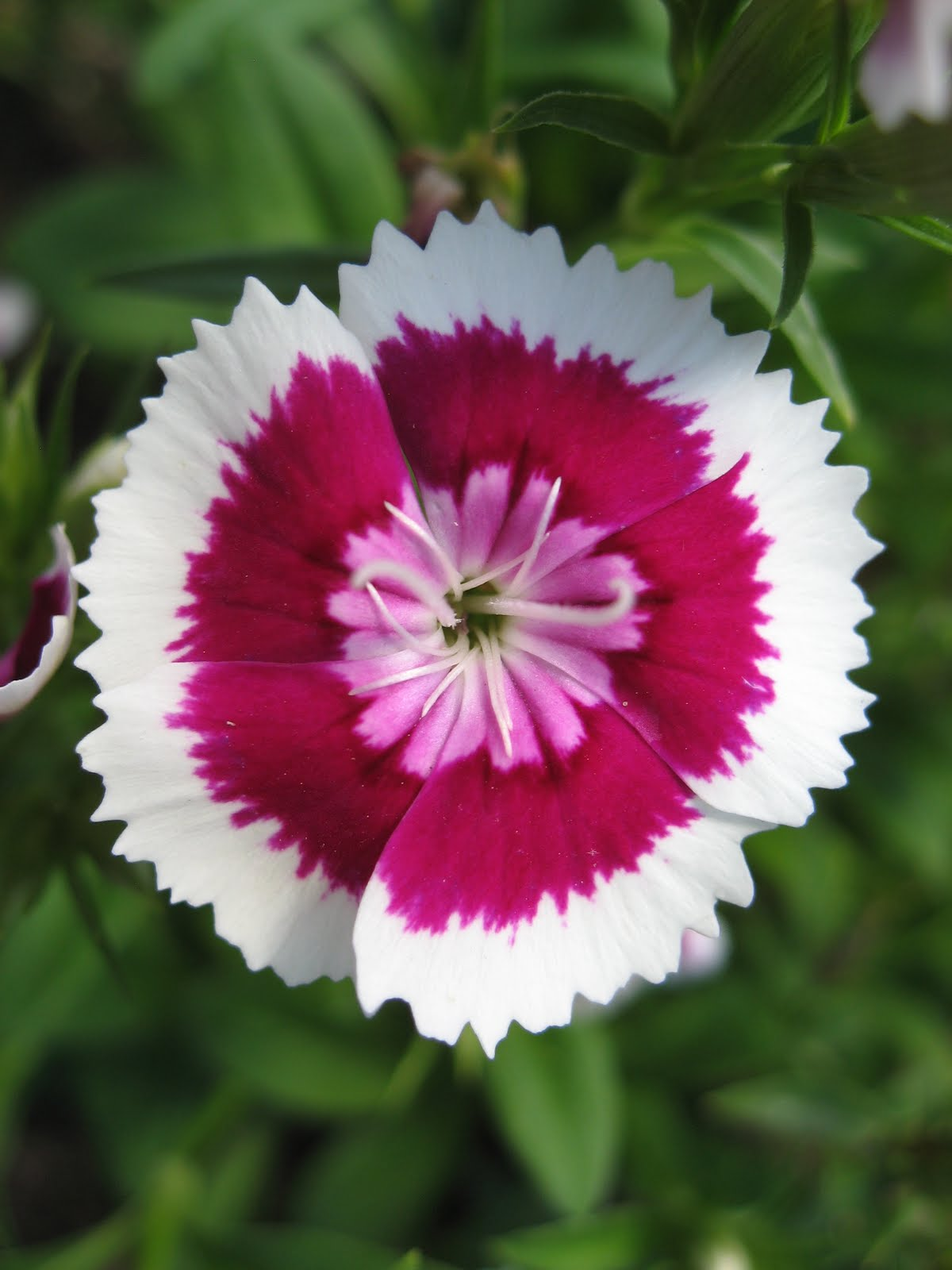 Pink and white flowers names credainatcon images of white flowers with names pink and stock mightylinksfo