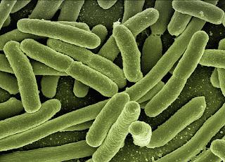 Legionella sierotipo 1