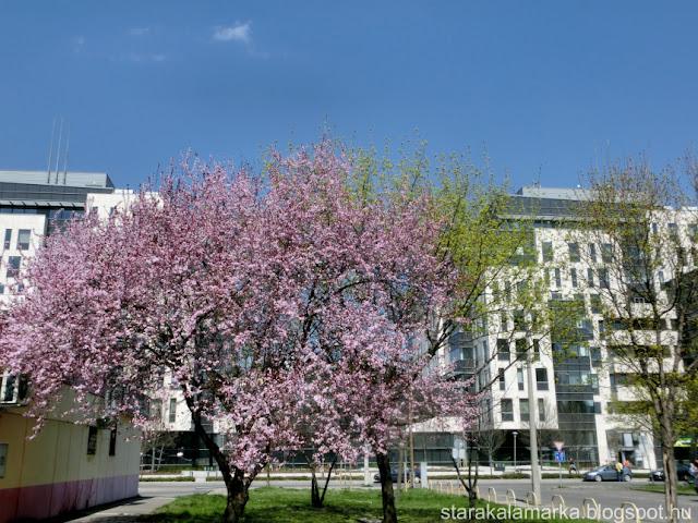 недвижимость Будапешта, квартиры в Будапеште, недвижимость в Венгрии, о жизни в Венгрии