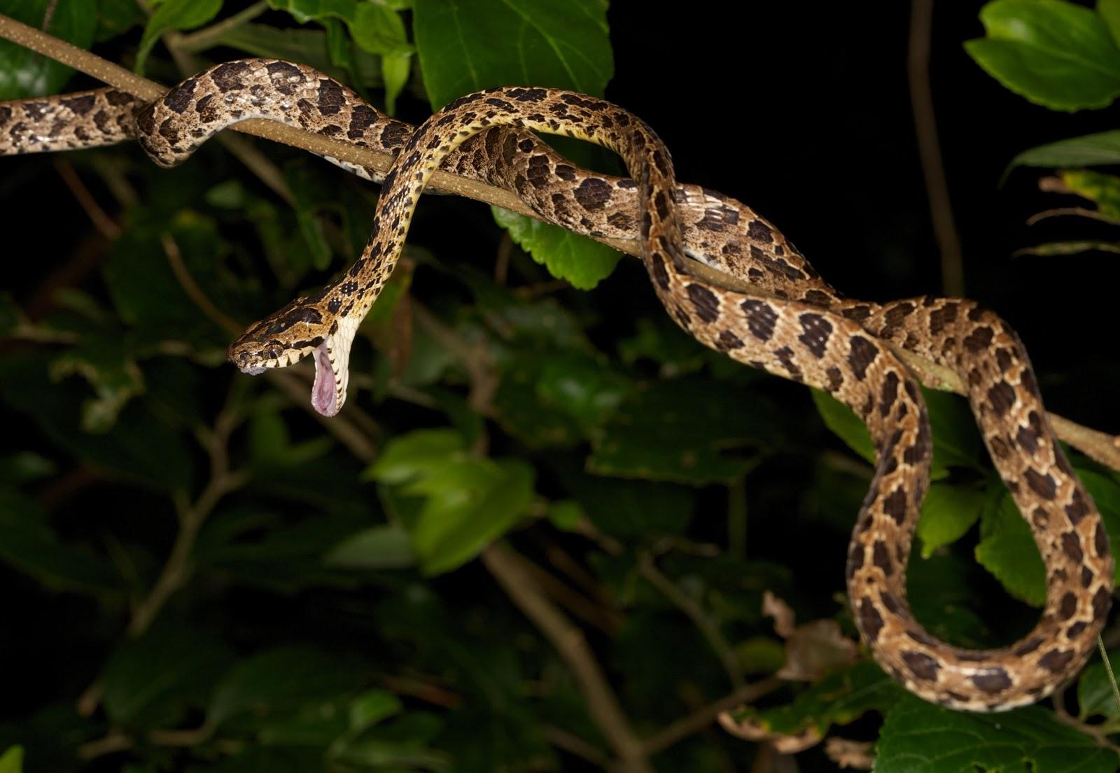 Animal Planet Snakes Related Keywords - Animal Planet ... - photo#28