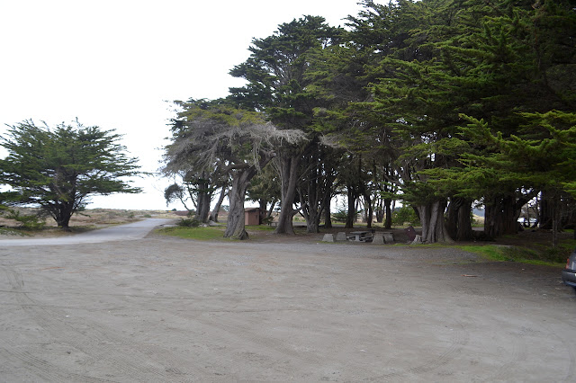 picnic area with rows of trees