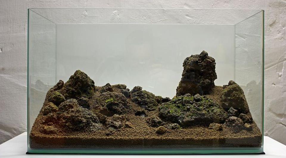 CARA MEMBUAT AQUASCAPE ~ AquaStigma