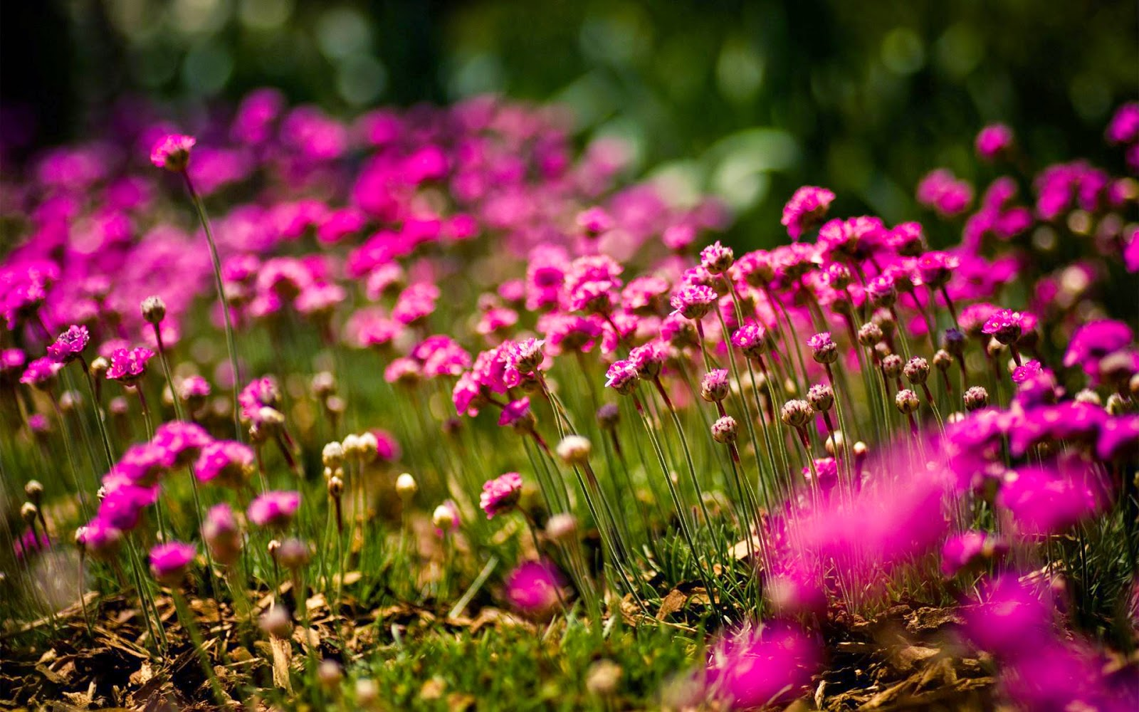 Sunny Nature Flowers Field Wallpapers