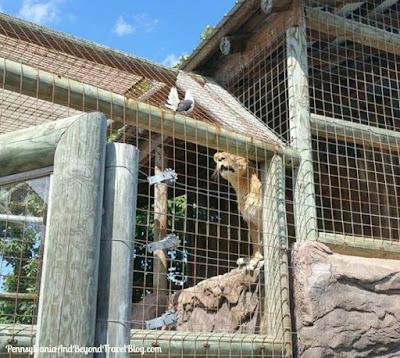 Lake Tobias Wildlife Park and Zoo in Halifax Pennsylvania