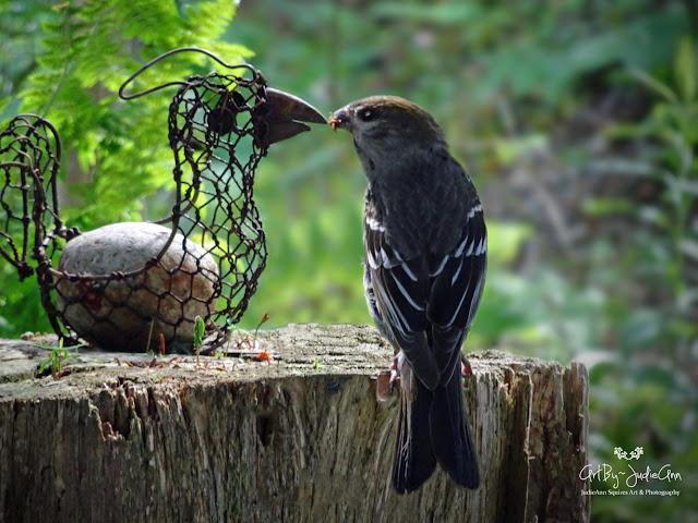 Cute Funny Bird