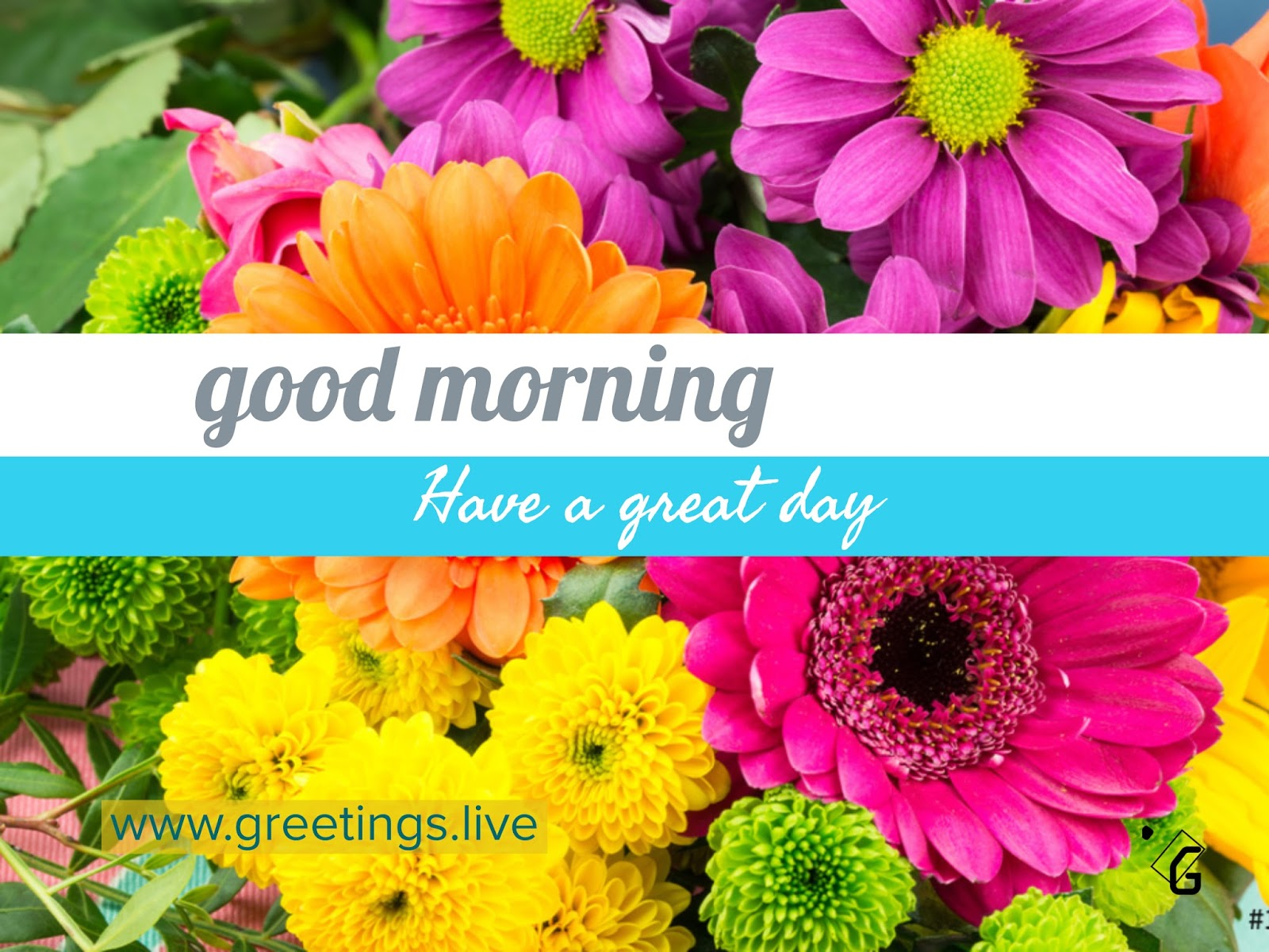 Good Morning Greetings With Flowers Flowers Online 2018 Flowers