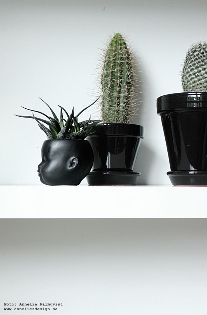 ansikte kruka, kaktus, kaktusar, minikaktus, minikaktusar, inredning, annelies design, webbutik