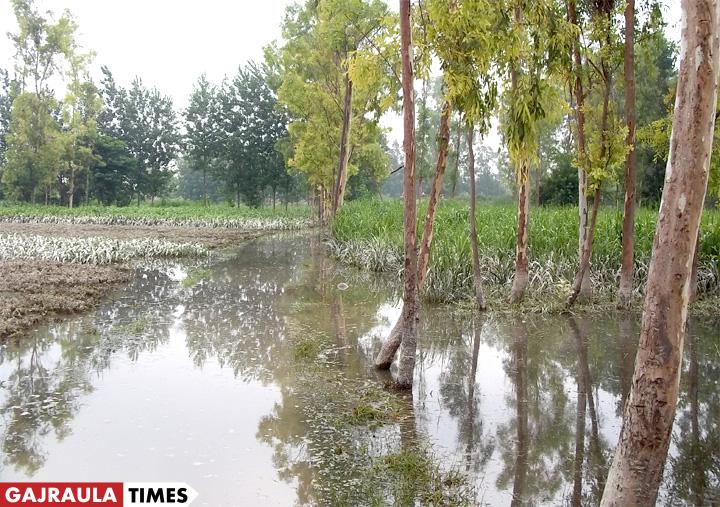 tigri-ganga-flood-image