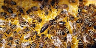 Rüyada arı görmek