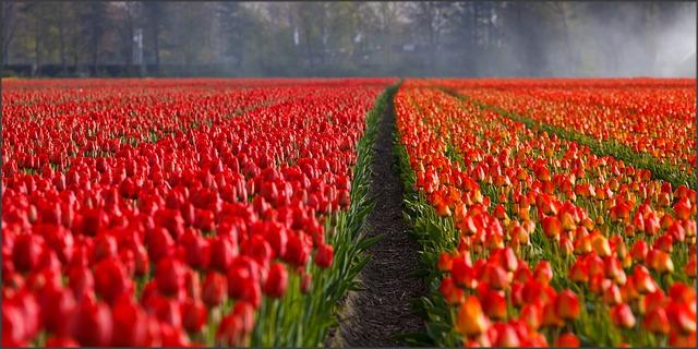 9 Objek Wisata Terbaik Di Belanda Berkuliah Com