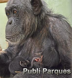 La hembra Malin y sus dos bebés