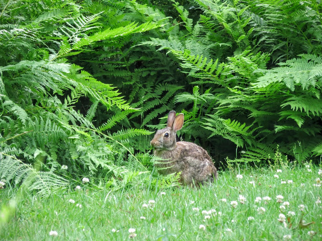 Bunny at Mount Auburn Cemetery outside of Boston, Massachusetts