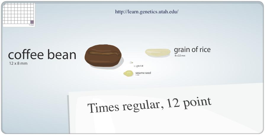 Learn Genetics: What Makes a Firefly Glow? | eMedia