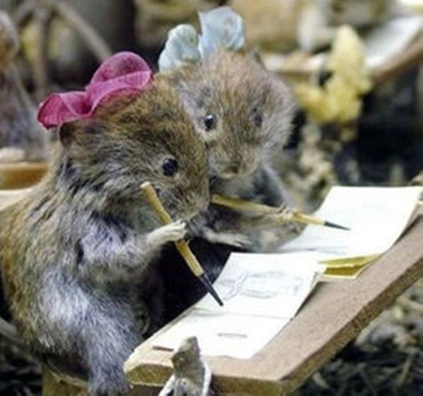 Khi động vật cũng ra vẻ đi học như ai