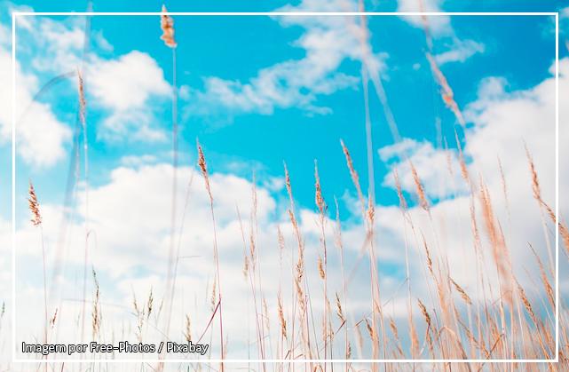 Fotografia de um campo aberto com trigos em primeiro plano, ao fundo, vê-se o céu azul cheio de nuvens