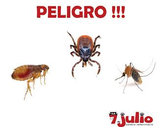Peligro-parásitos-externos-pulgas-garrapatas-mosquitos
