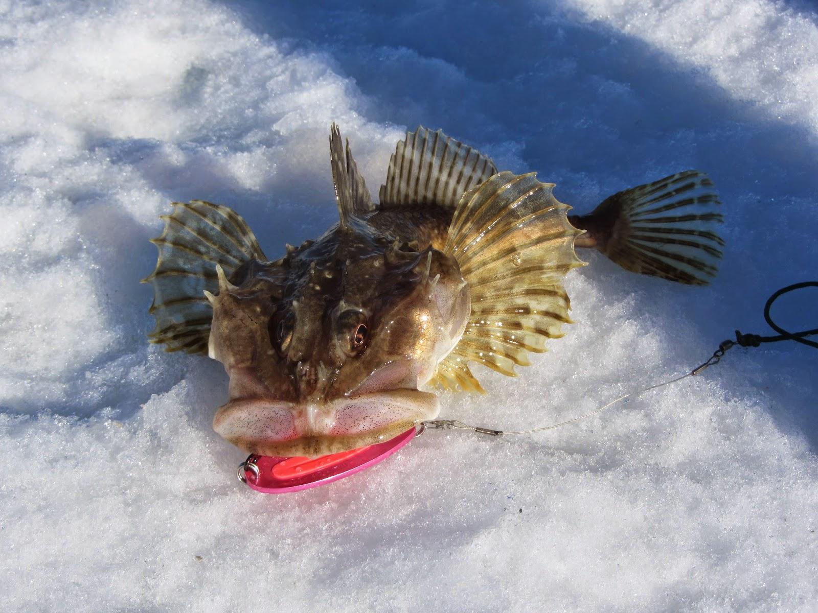 run, gloria, run!: ice fishing in July
