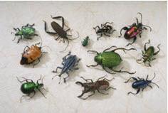 Susan X Bradley A Ya Writer Mom Forensic Entomology