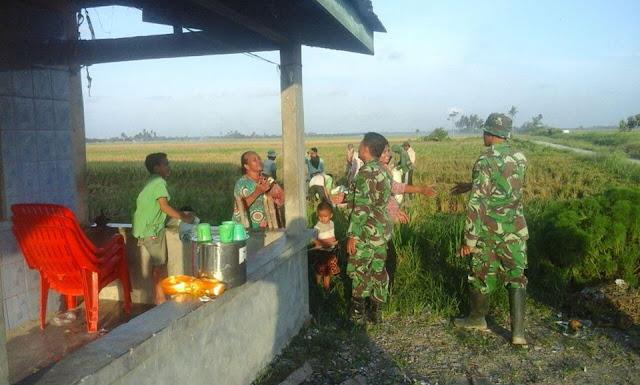 Babinsa Ikut Memanen Padi Milik Petani Dari Hasil Kerja Sama Selama Ini di Desa Pertahanan