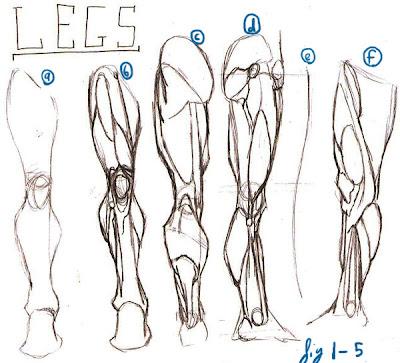 leg muscles drawing - photo #31