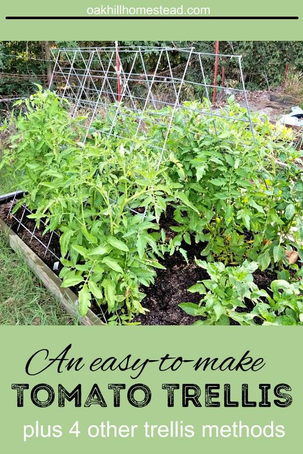4+ Ways to Trellis Tomato Plants to Maximize Your Garden