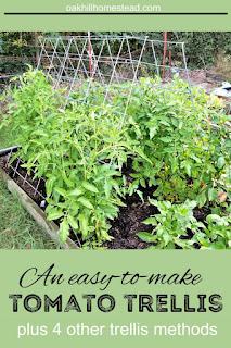 An easy-to-make tomato trellis and 4 more ways to trellis your tomatoes.
