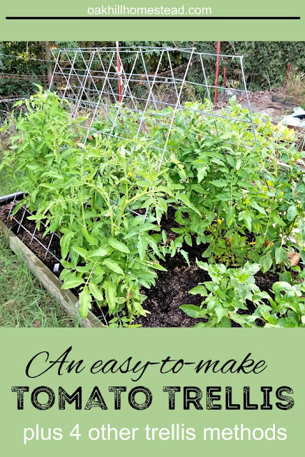 An easy-to-make tomato trellis and 4 more ways to trellis your tomatoes.