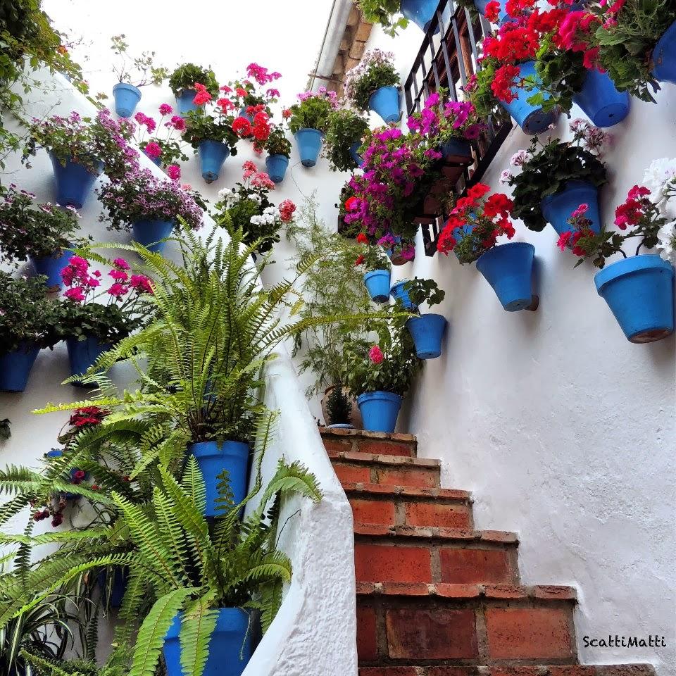 LAS COLECCIONES DE MI VIDA: Flores ( PATIOS ANDALUCES )