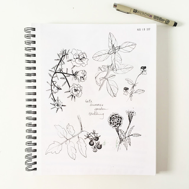 garden sketches, garden sketchbook, botanical sketches, summer, Anne Butera, My Giant Strawberry