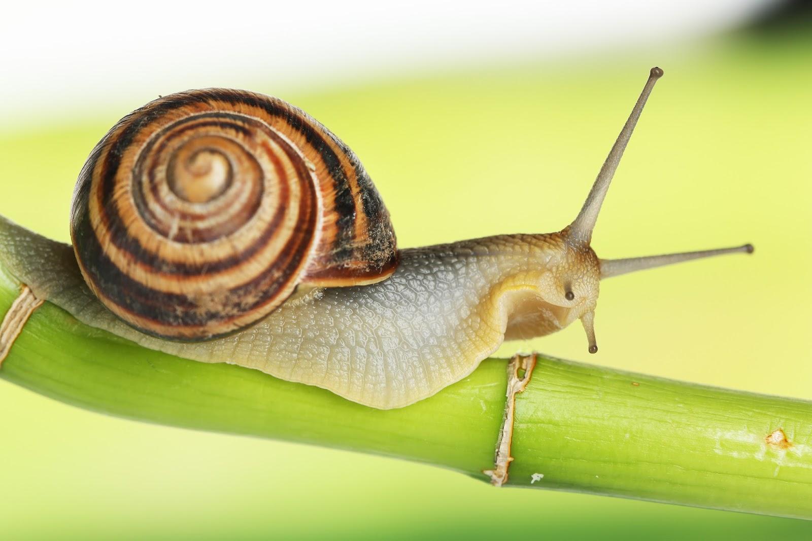 Slugs ! Garden Bible