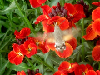 moth on flower photo