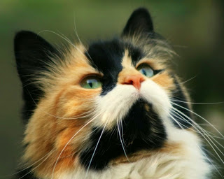Кошки: приметы и суеверия, сонник