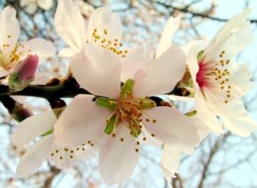 Foto de flores blancas y abiertas