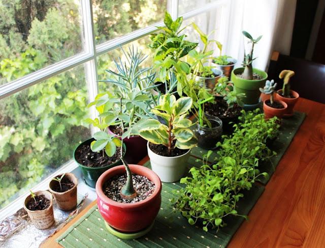 تعرف على فوائد النباتات المنزلية الصحية والنفسية