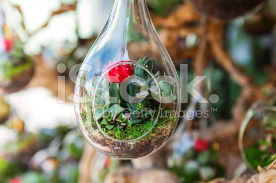 vertical-garden-succulent-terrarium-jakarta-indonesia-blogspot-com4