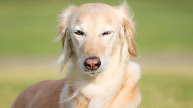 Giúp bạn chọn chó phù hợp với bản thân
