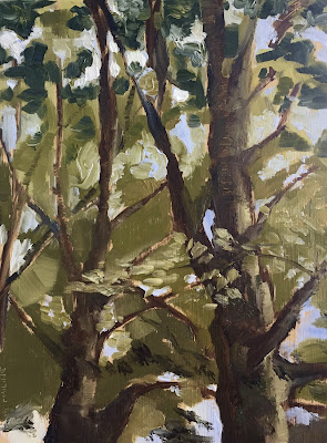 Beech trees, plein air oil painting by Philine van der Vegte