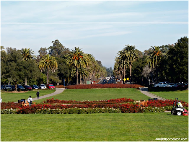 Palm Drive & The Oval, Universidad de Stanford