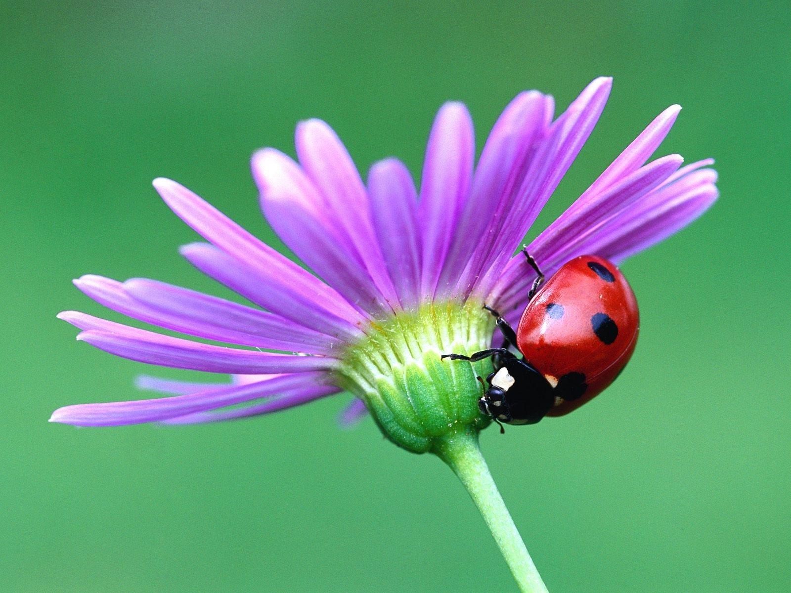 'Ketenangan': ♥Kumbang dan Bunga