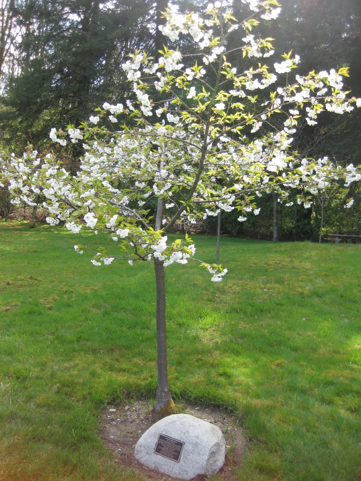 Seattle Japanese Garden Community Blog Seen In The Garden