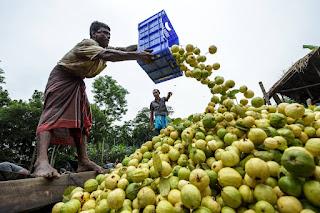 방글라데시 구아바 시장