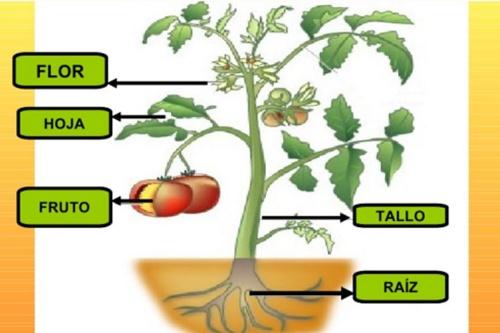 Moclinos el rinc n del tutor de primaria partes de las - Cosas sobre las plantas ...