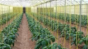 دراسة جدوى فكرة مشروع الصوب الزراعية لإنتاج الخضر فى مصر 2019