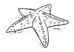 Disegni Di Animali Marini Da Colorare Scuolissima Com