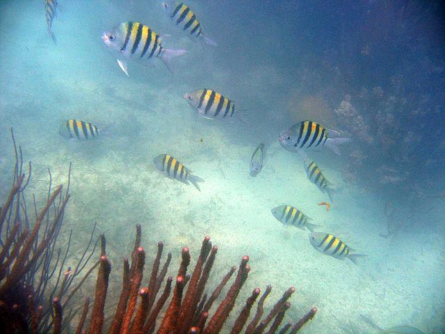 Schnorcheln mauritius Silver beach