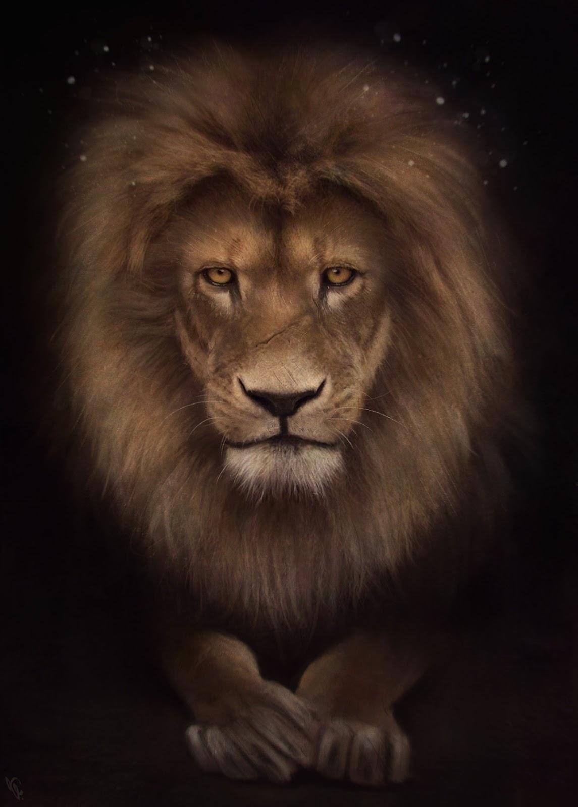 Картинки анимации львов, надписью вдох турецкие