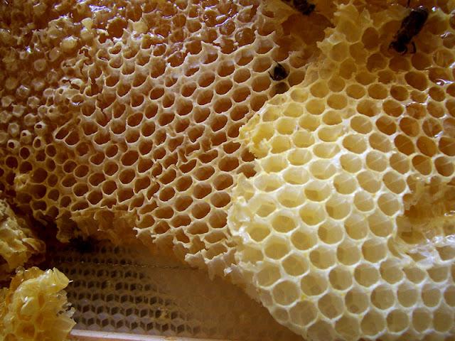 Ενδιαφέρον σχόλιο για μελιτωέκκριση στον Ελικώνα