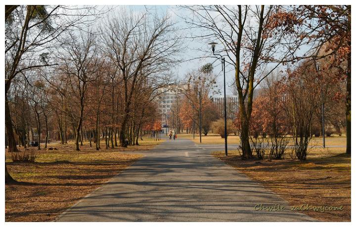 park miejski w Poznaniu, wiosna w parku, alejka parkowa wiosna