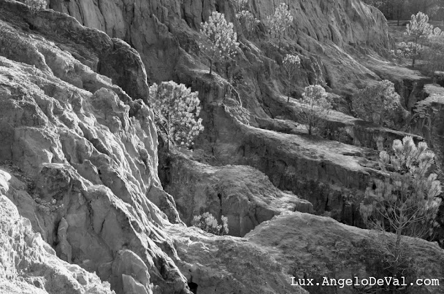 http://angelo-deval.pixels.com/featured/cliff-pine-trees-in-monochrome-angelo-deval.html